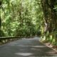 Rainforest Canopy Covering The Road to Hana